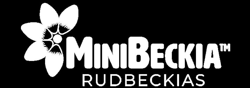 Rudbeckia Minibeckia Flame logo
